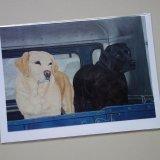 Labradors Art Greeting Card