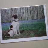 Springer in Bluebell Woods Greeting Card