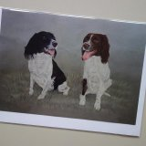 Springers Greeting Card