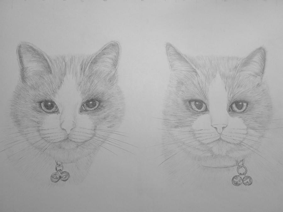 Cats Pencil Portrait
