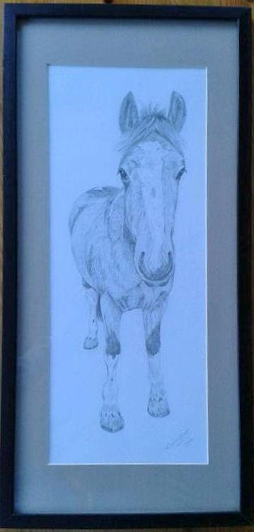 Horse Graphite Drawing