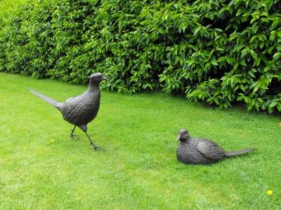 Pheasnts
