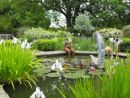 Pond with lilies and Sunshine