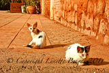 Two Cats, Marrakech