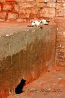 Three Cats, Marrakech