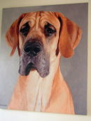 Private commision of a 17 month old Great Dane.