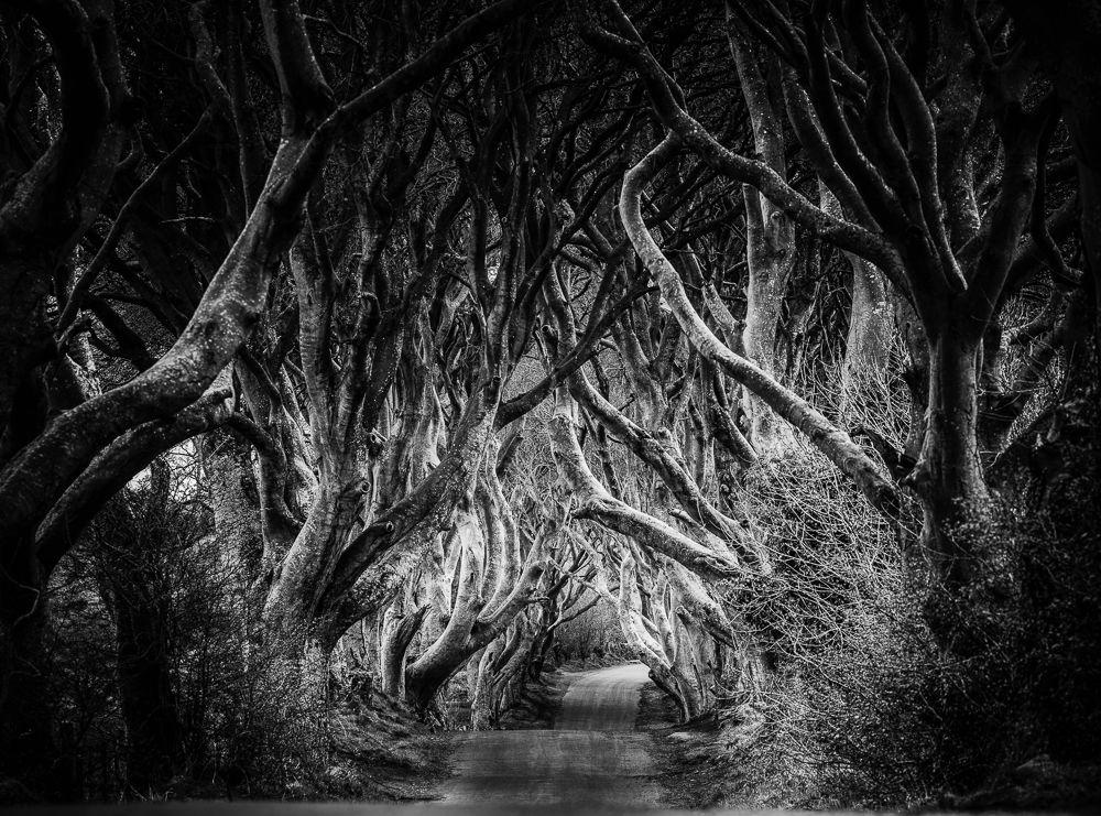 dark hedges monochrome