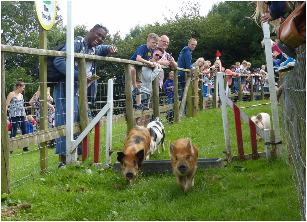 Highly Commended-Pig Racing-Tony Velterop