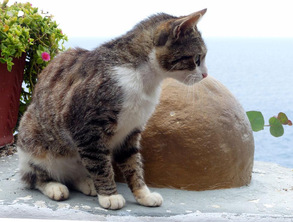 Commended-Seaside Cat-Steve Sullivan