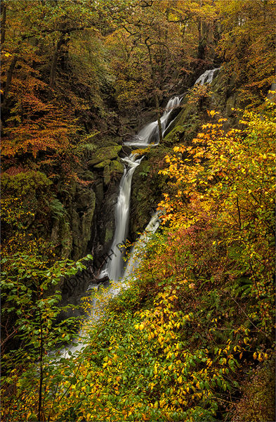 Commended-Shades of Autumn-Suzanne Parsons LRPS