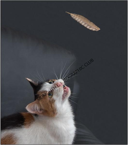 2nd-I will Catch It-Keith Urwin