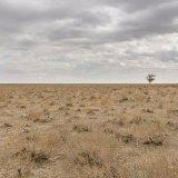 Commended-Lone Survivor Uzbek Plain-Bob Reynolds