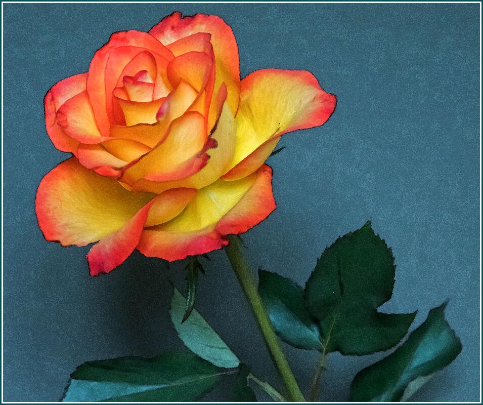 2nd-Rose-Susan Cox