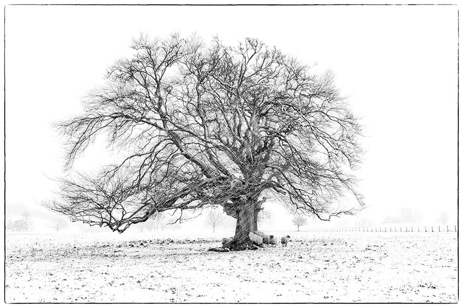 Highly Commended-Sheltering from the blizzard-Suzanne Parsons LRPS