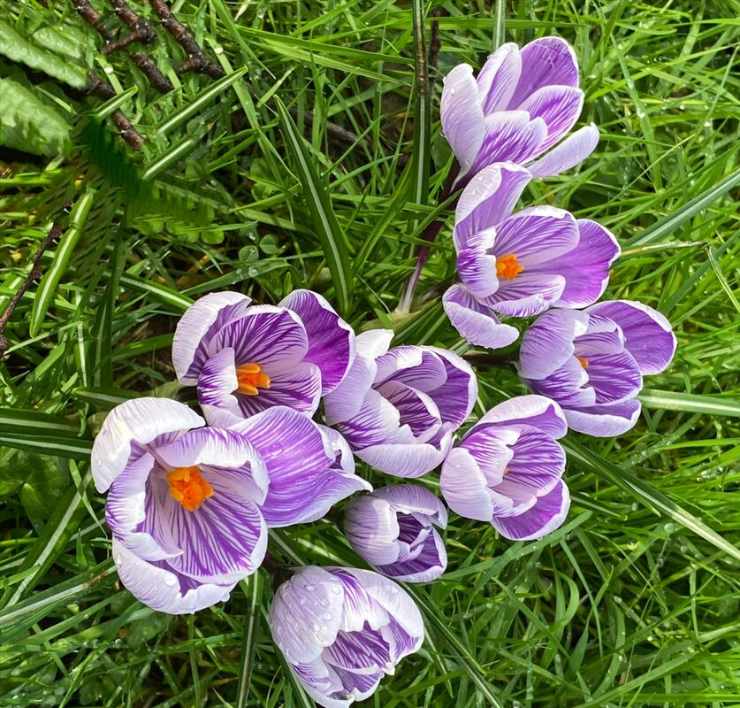 Highly Commended-Spring at Last-Teresa Jacombs