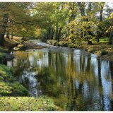 The Byes in Autumn