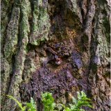 Tree trunk and fern