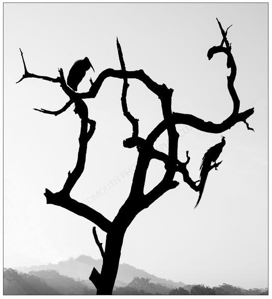3rd-Yala Roosting Tree-Bob Reynolds, ARPS