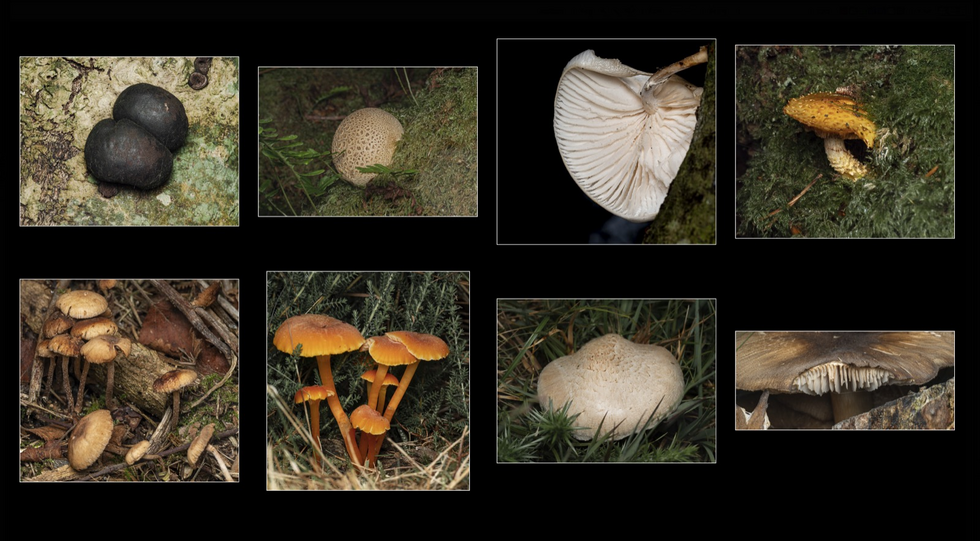 Fungi by Mike Hawkridge ARPS AFIAP