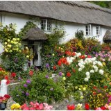 Branscombe Cottages Devon