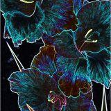 Flower Absract