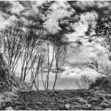 Wispy trees