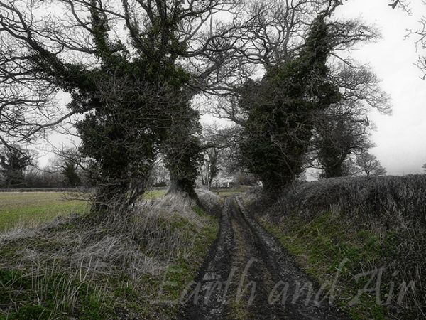 February Lane