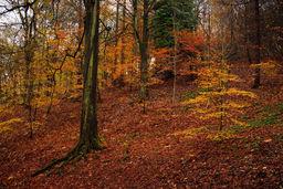 Balgay Wood
