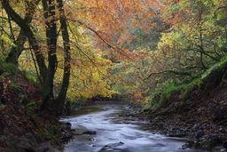 Alyth Burn in autumn