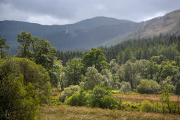 Trossachs Forest