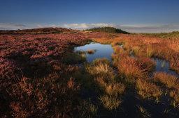 Marsh Pool and Grasses