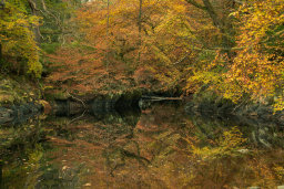 Woodland Reflecions
