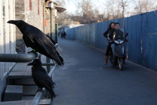 birds in black