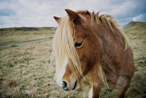 photogenic horse