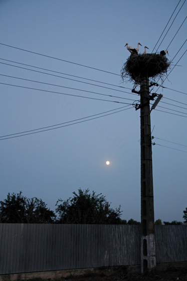 stork nest against moonrise
