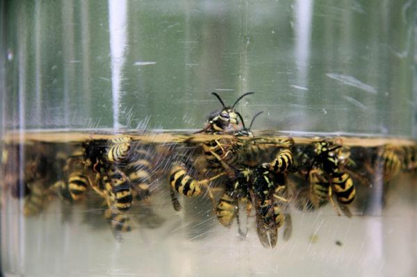 wasp massacre