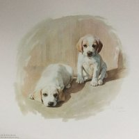 Beagle Pups by Shirley Smith