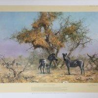 Zebras and colony weavers