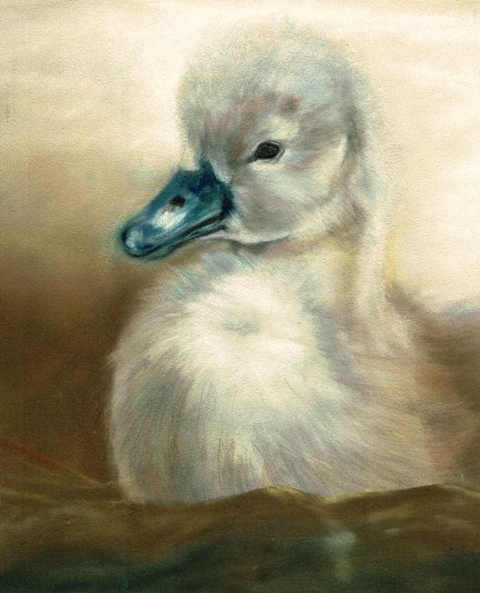Duckling; pastel  S