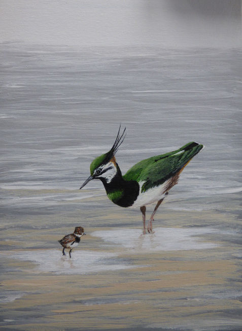 Lapwing and Young; acrylic