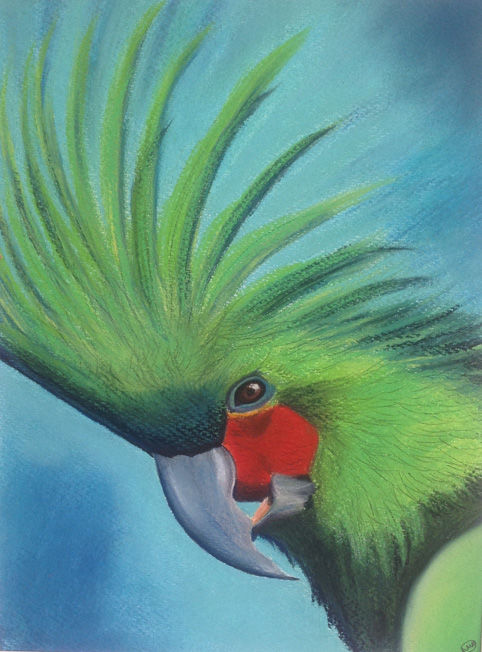 Mad Bird; pastel; 54 x 54 FS