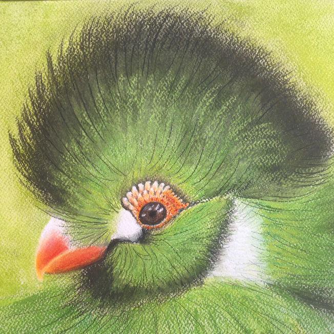 Green Beakie; pastel; 54 x 54 FS