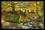 Autumn in Padley