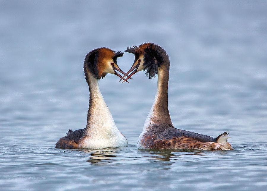 Futen in love