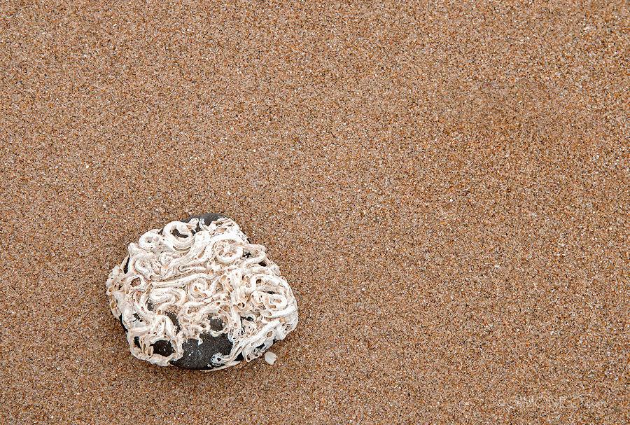 Fossiel op het strand