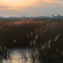 Spotlight on the reeds, Volendam