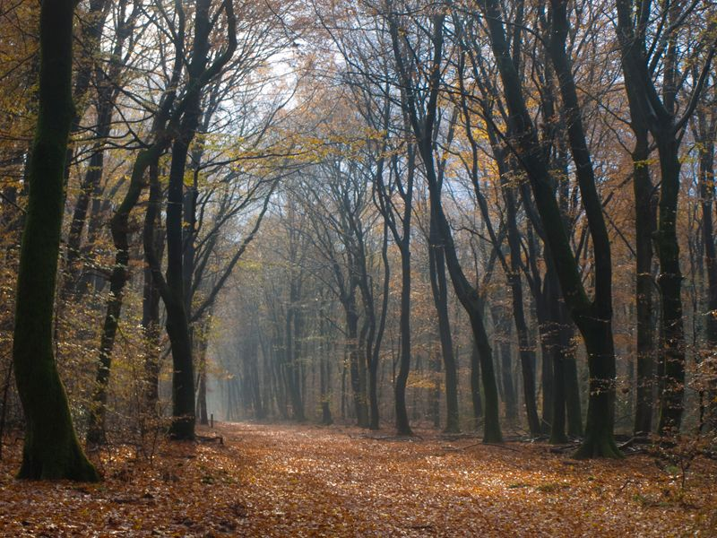 Autumn in the Speulderbos