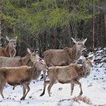 Deer o dear