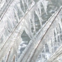 Winter: Icicles