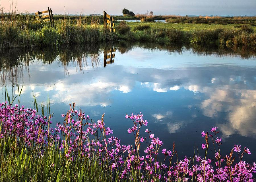 Koekoeksbloemen in mei, Waterland